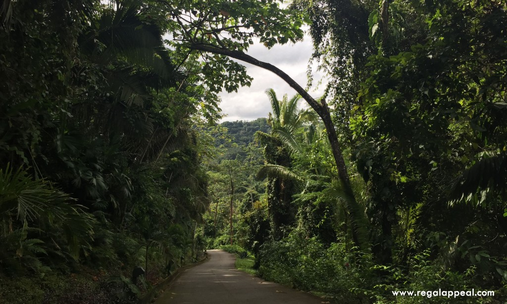 Belcampo_Belize_2