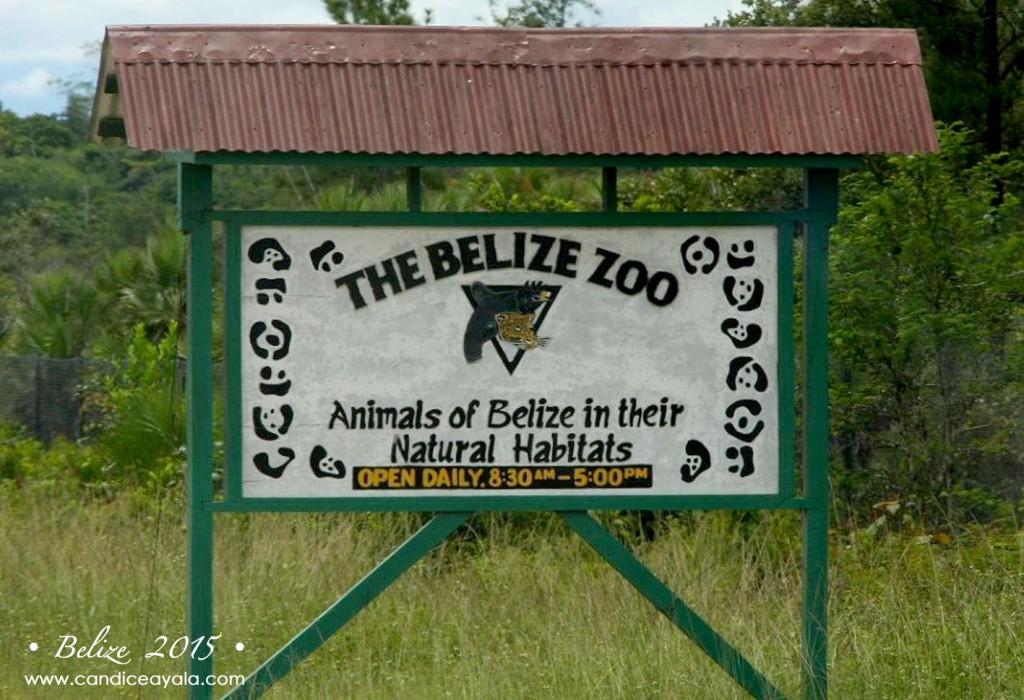 TheBelizeZoo_9
